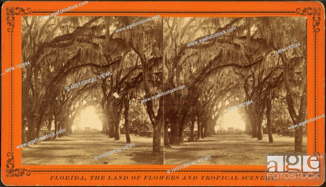 Stock Photo: Avenue in Bonaventure, near Savannah, Georgia. Additional title: D.J. ryan's Stereoscopic views. Robert N. Dennis collection of stereoscopic views United States.