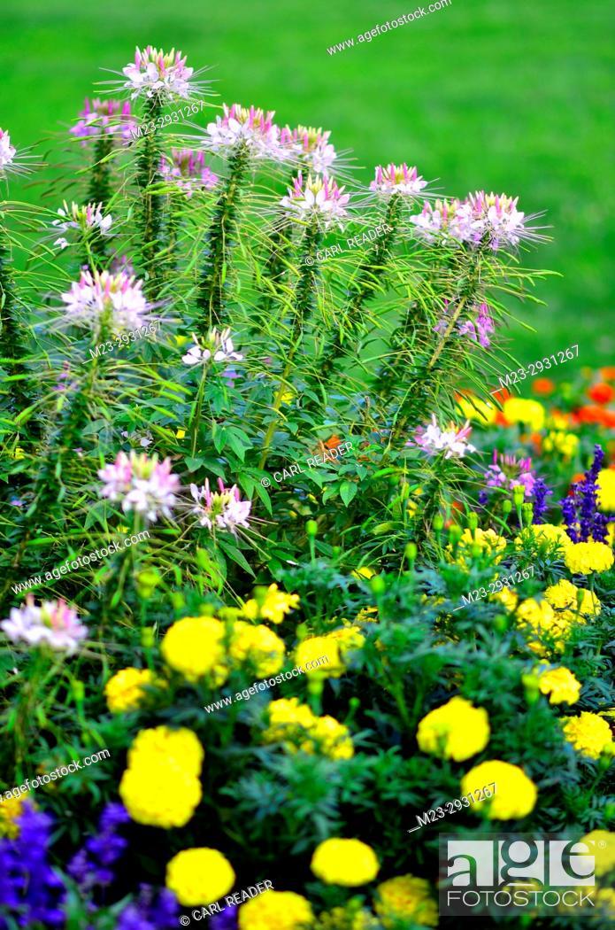 Stock Photo: A flower garden in soft focus, Pennsylvania, USA.