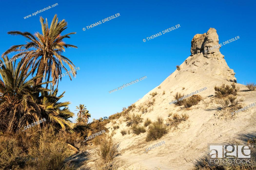 Stock Photo: Bare ridges of eroded sandstone and palm trees in the Tabernas Desert, Europe's only true desert. Almeria province, Andalusia, Spain.