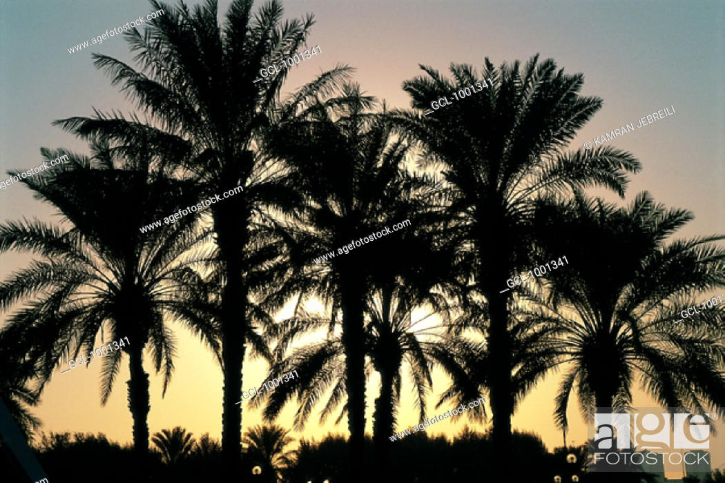 Stock Photo: Silhouettes of palm trees at sunset in Dubai, UAE.
