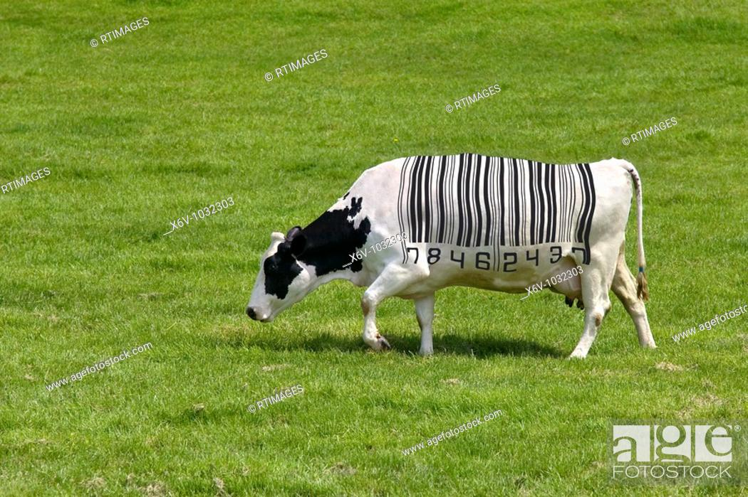 Stock Photo: Concept image of a dairy cow with a barcode for markings.