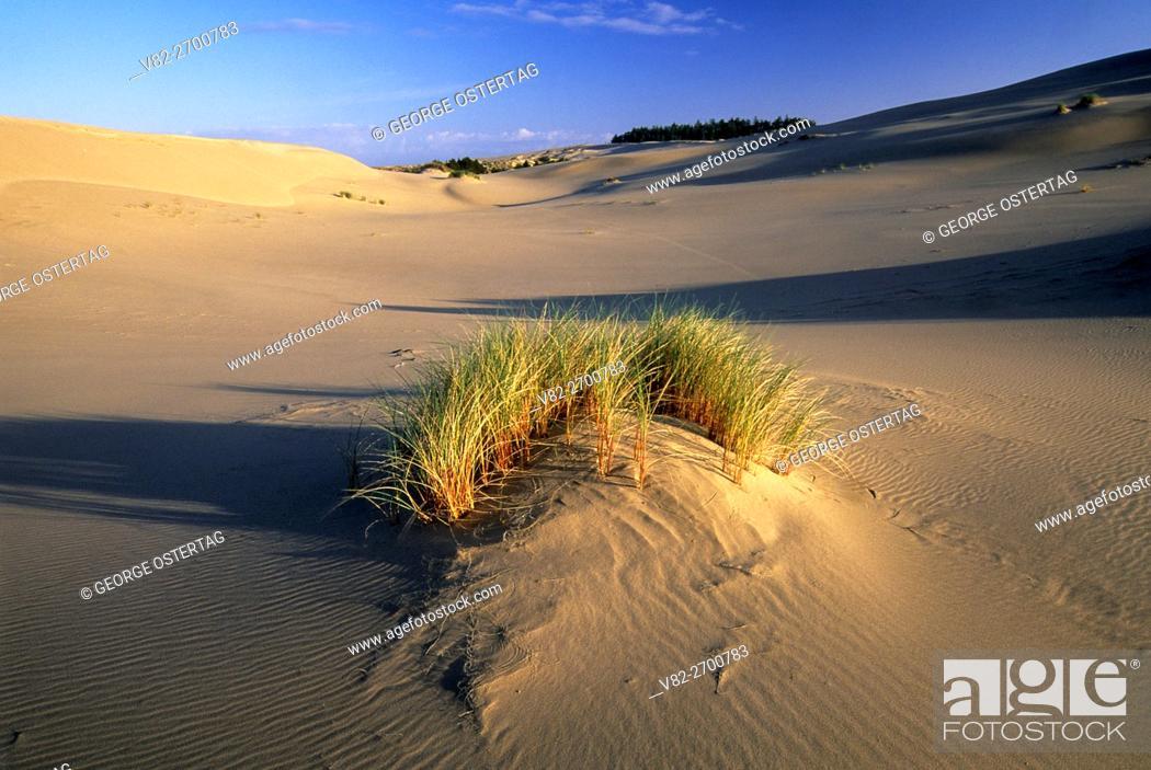 Stock Photo: Sand dune, Umpqua Dunes Scenic Area, Oregon Dunes National Recreation Area, Oregon.