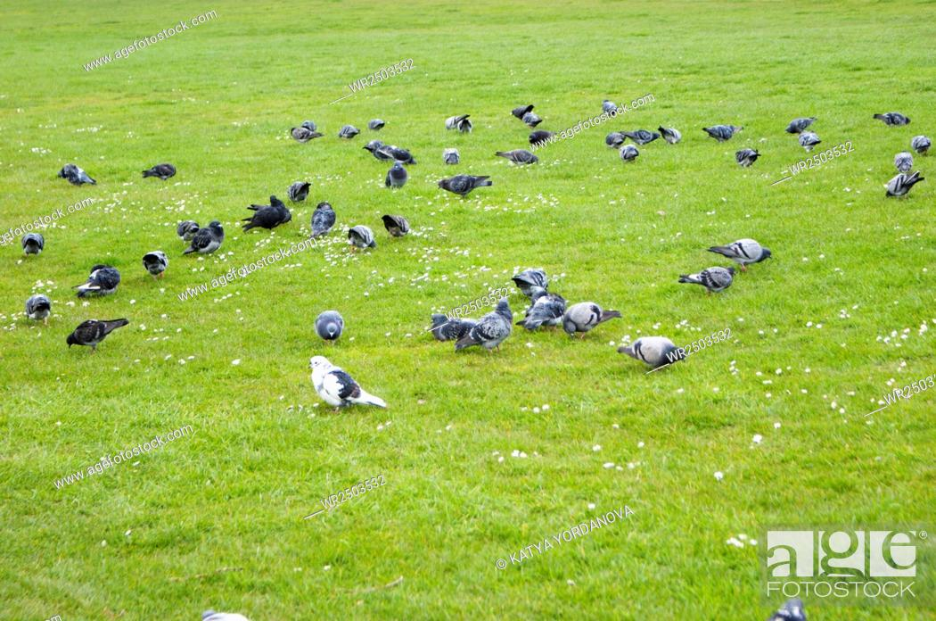 Stock Photo: Pigeons in public park.