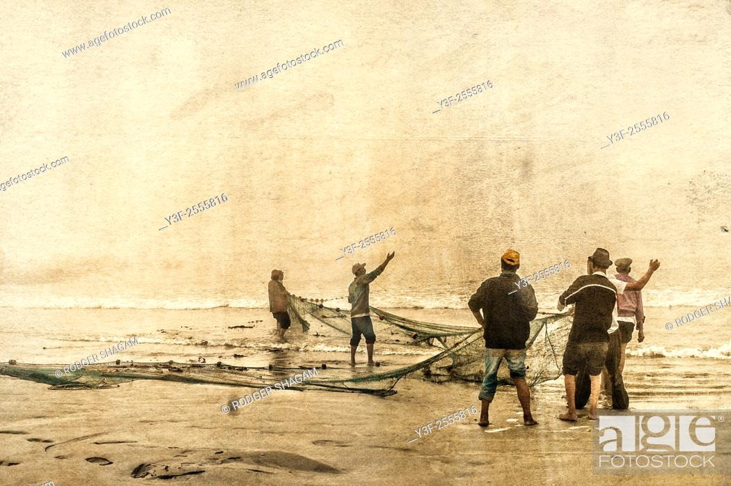 Stock Photo: Fishermen hauling in their nets in a thick morning fog, The net contained three tonnes of mullet also know as harders or springers.