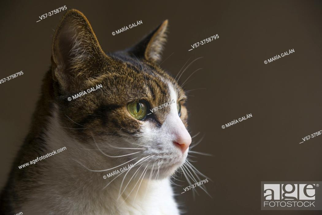 Stock Photo: Tabby and white cat.