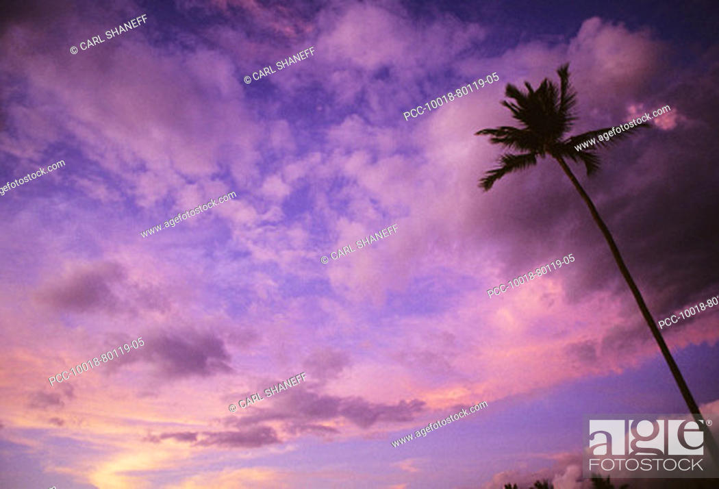 Stock Photo: Gorgeous pink and purple sunset sky with single palm tree.