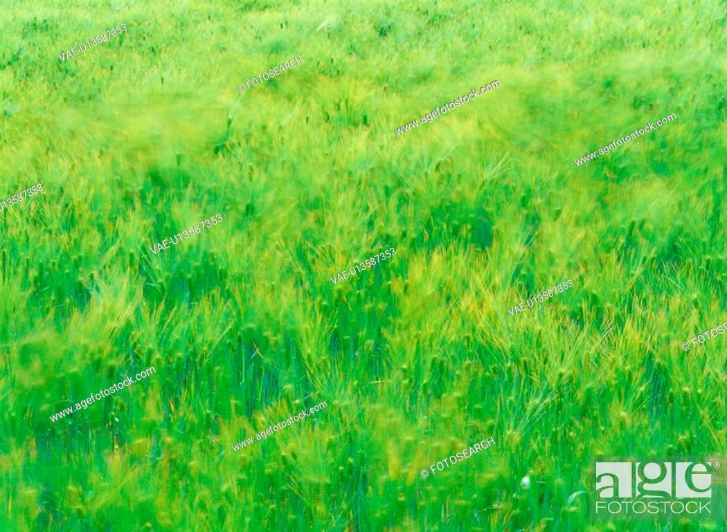 Stock Photo: nature, grass, field, landscape, scenery, plant.