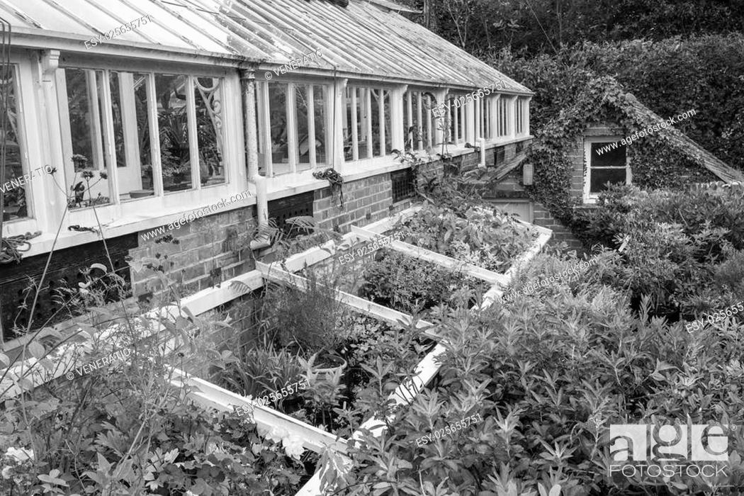 Stock Photo: Beautiful old Victorian era greenhouse left ro ruin in old English garden in black and white.