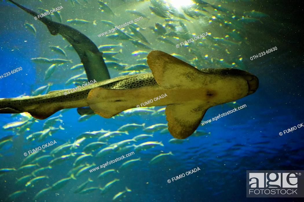 Stock Photo: Marine life, Grand Aquarium, Ocean Park, Hong Kong.