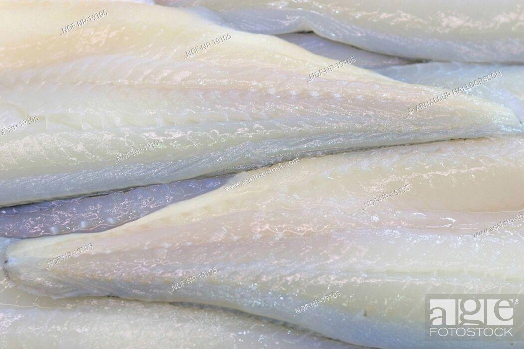 Stock Photo: White fish fillets.