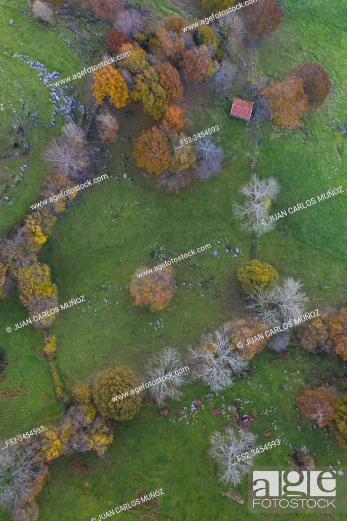 Stock Photo: Aerial view, Landscape in autumn, Beech forest, Ramales de la Victoria, Alto Ason, Cantabria, Spain, Europe.