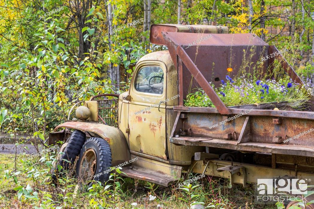 Stock Photo: An old vintage vehicle with flowers growing in the pickup bed; McCarthy, Alaska, United States of America.