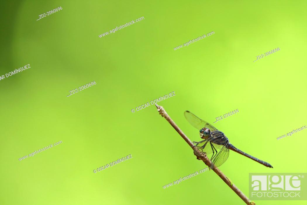 Stock Photo: Dragonfly perched on a small branch. Cat Tien National Park. Vietnam.