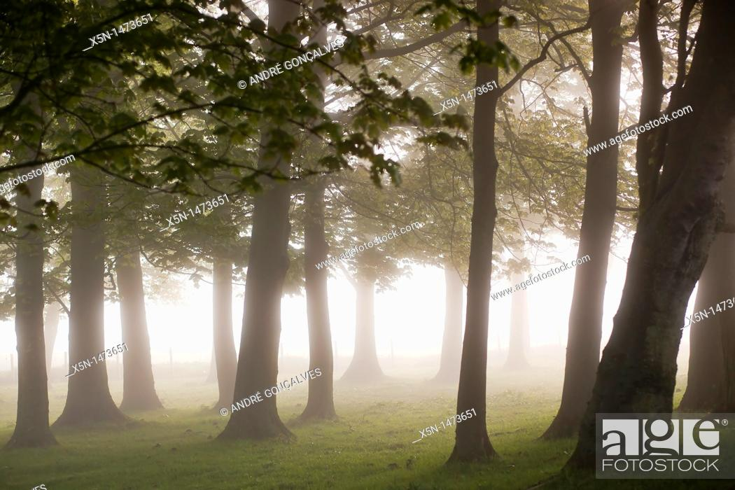 Stock Photo: Mystic Forest, England.