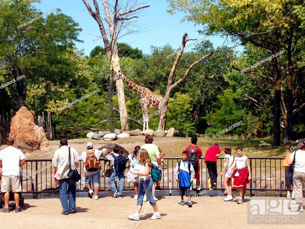 Stock Photo: Crowd assembled at the Giraffe and Ostrich enclosure at Chicago's Lincoln Park Zoo.