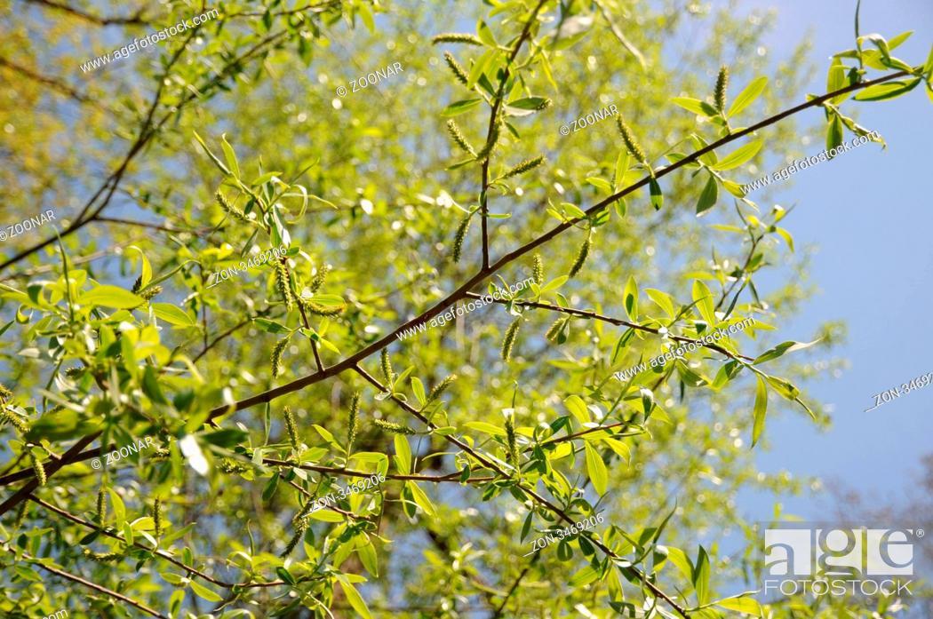 Stock Photo: weibliche Blüten.