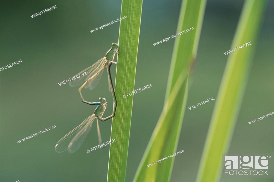 Stock Photo: Insect.