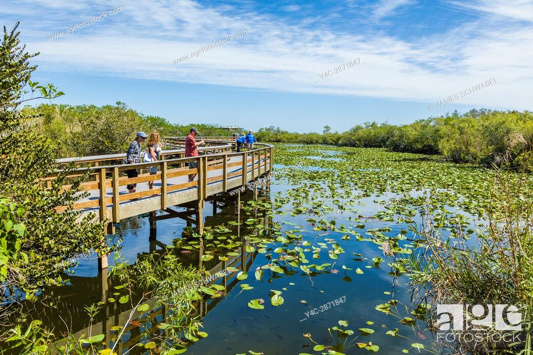 Imagen: The popular Anhinga Trail at the Royal Palms Visitor Center though sawgrass marsh in the Everglades National Park Florida.
