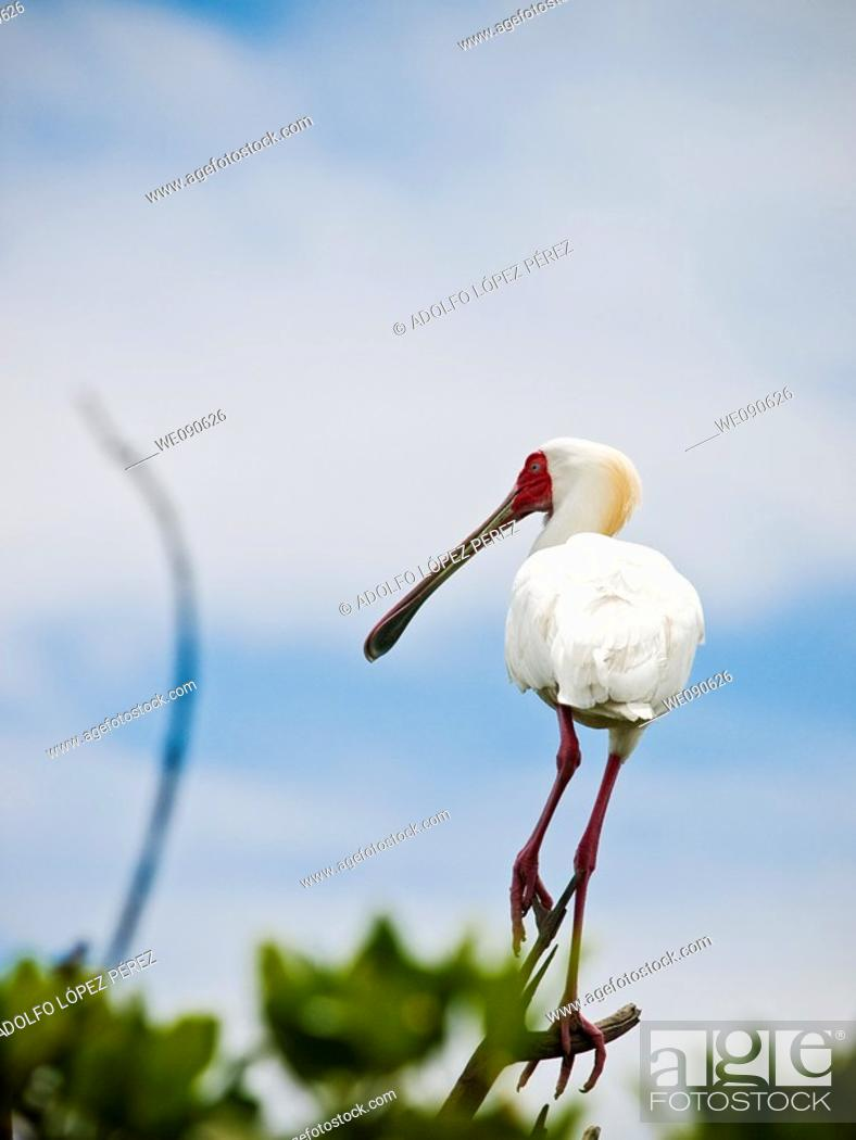 Stock Photo: Bird in Bird's Island, Ziguinchor, Senegal.