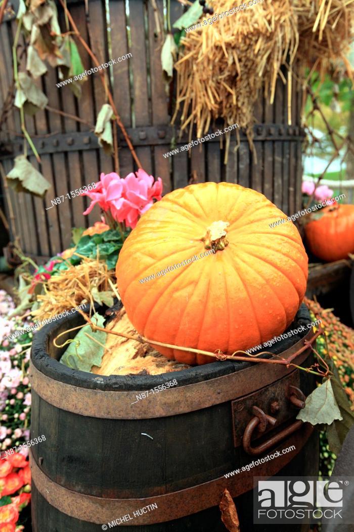 Stock Photo: Fall decor, pumpkin, barrels.