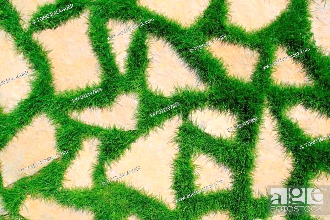 Stock Photo: stone path in green grass garden texture.