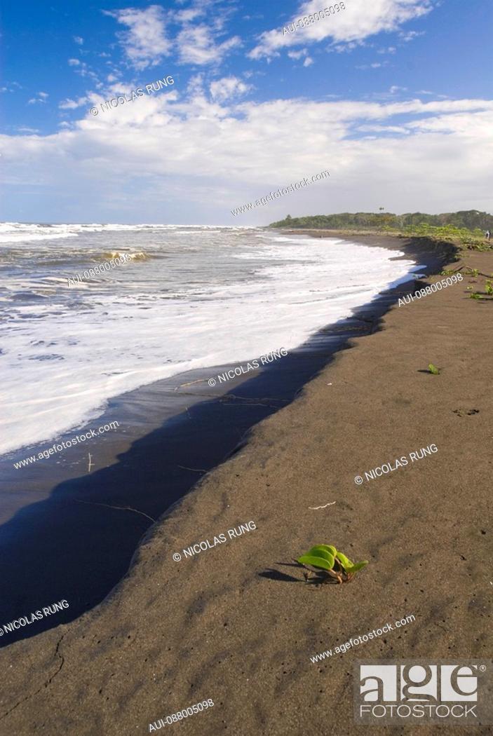 Stock Photo: Beach of the Caribbean coast - Tortuguero.