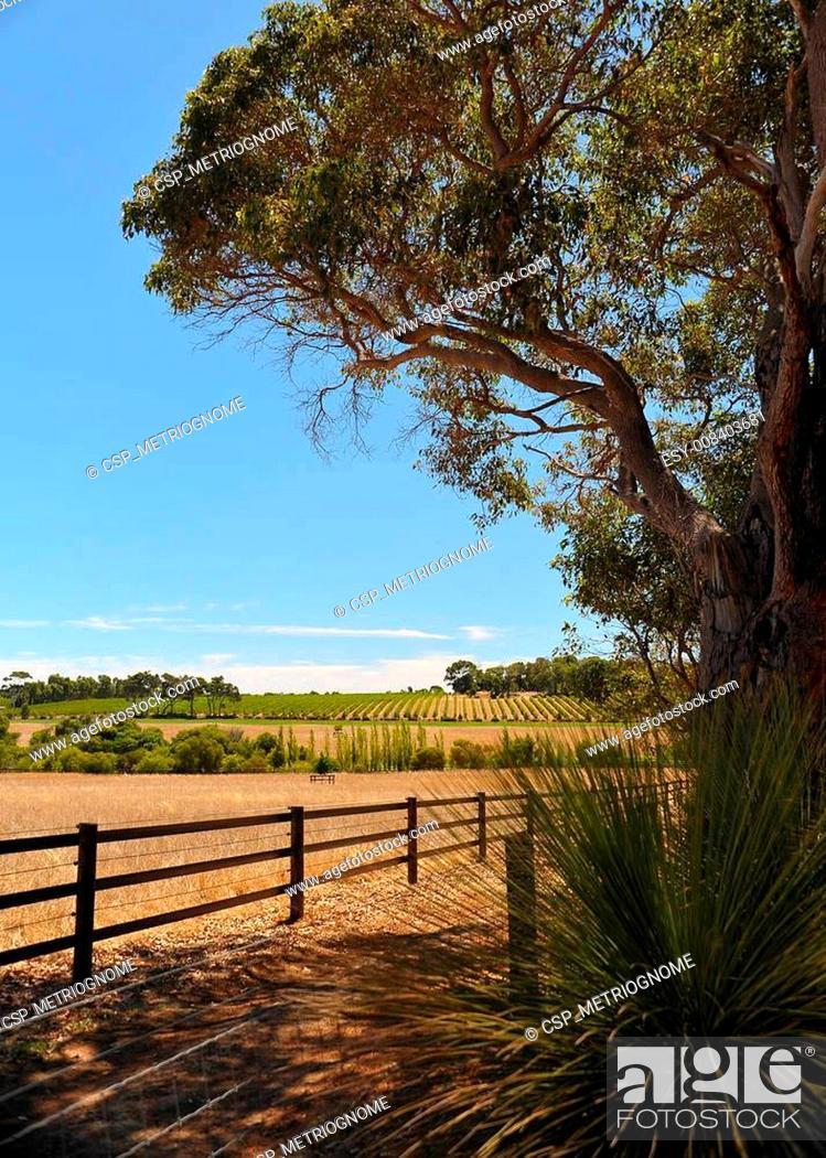 Imagen: vineyard in the frame.