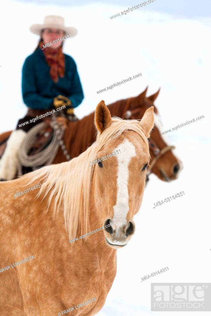 Palomino Horse Portrait Cowgirl In Background Blurred Stock Photo Picture And Rights Managed Image Pic Mba 03164351 Agefotostock
