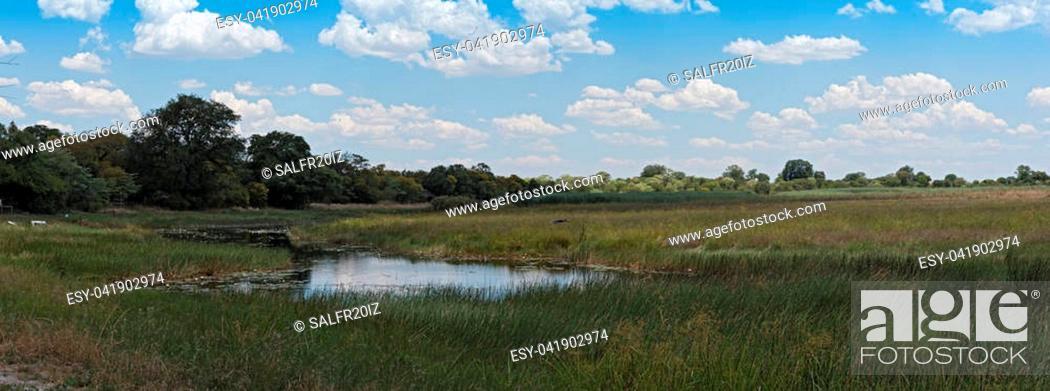 Stock Photo: Linyanti Swamp on the border of Botswana, Namibia.