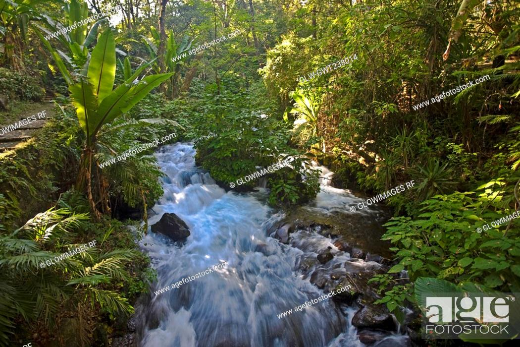 Stock Photo: Stream flowing through a forest, Barranca Del Cupatitzio National Park, Uruapan, Michoacan State, Mexico.