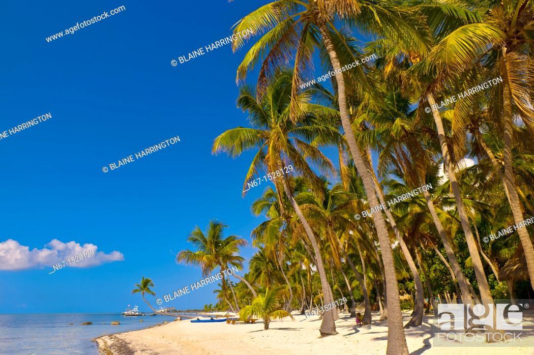 Stock Photo: The Moorings Village Pearl of Florida Keys resort, Islamorada Key, Florida Keys, Florida USA.