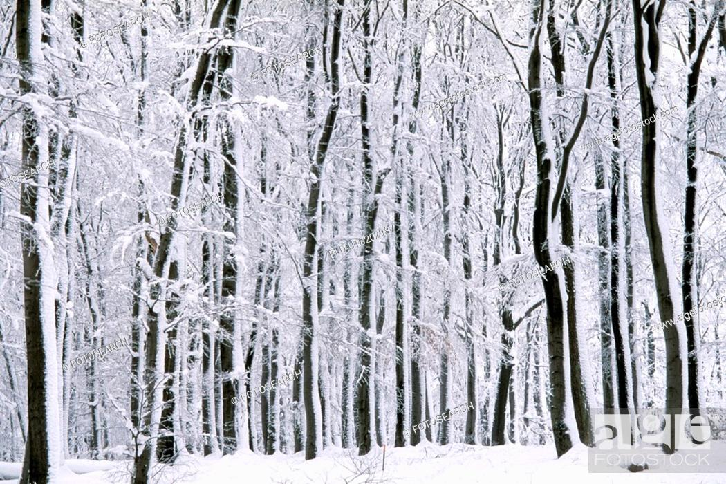 Stock Photo: Snowy forest.