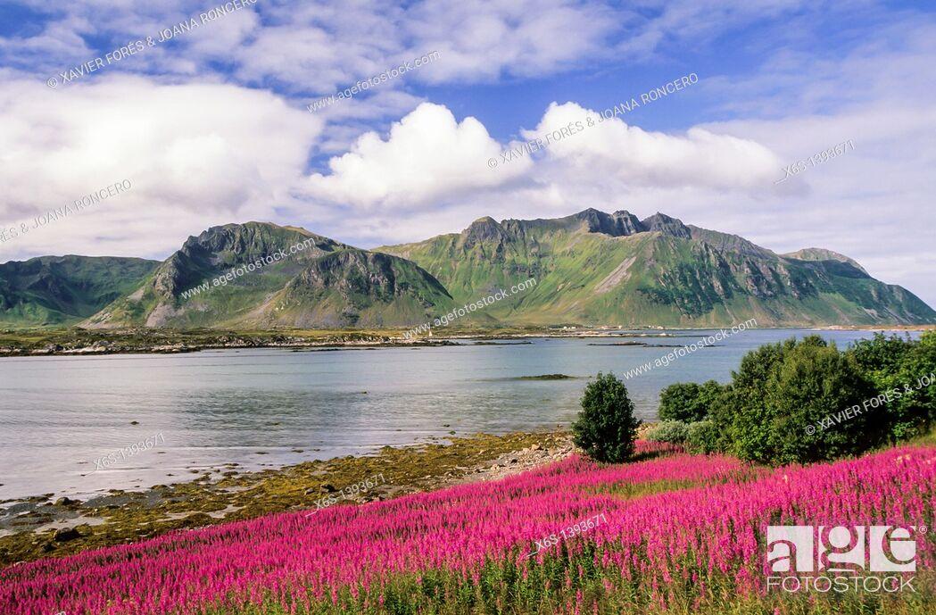 Stock Photo: Gimsøya, Lofoten Islands, Norway.