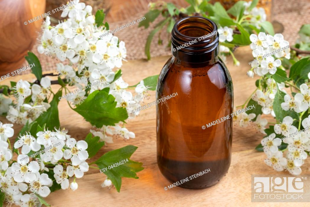 Stock Photo: A bottle of tincture with fresh blooming hawthorn branches.