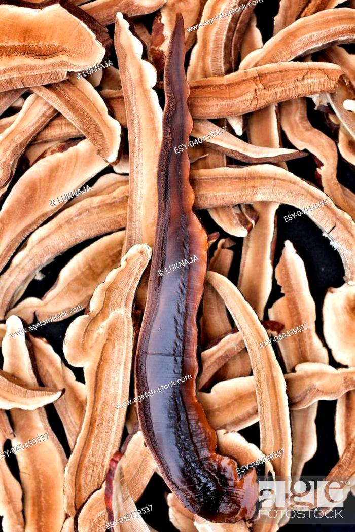 Stock Photo: Ganoderma Lucidum - Ling Zhi Mushroom.