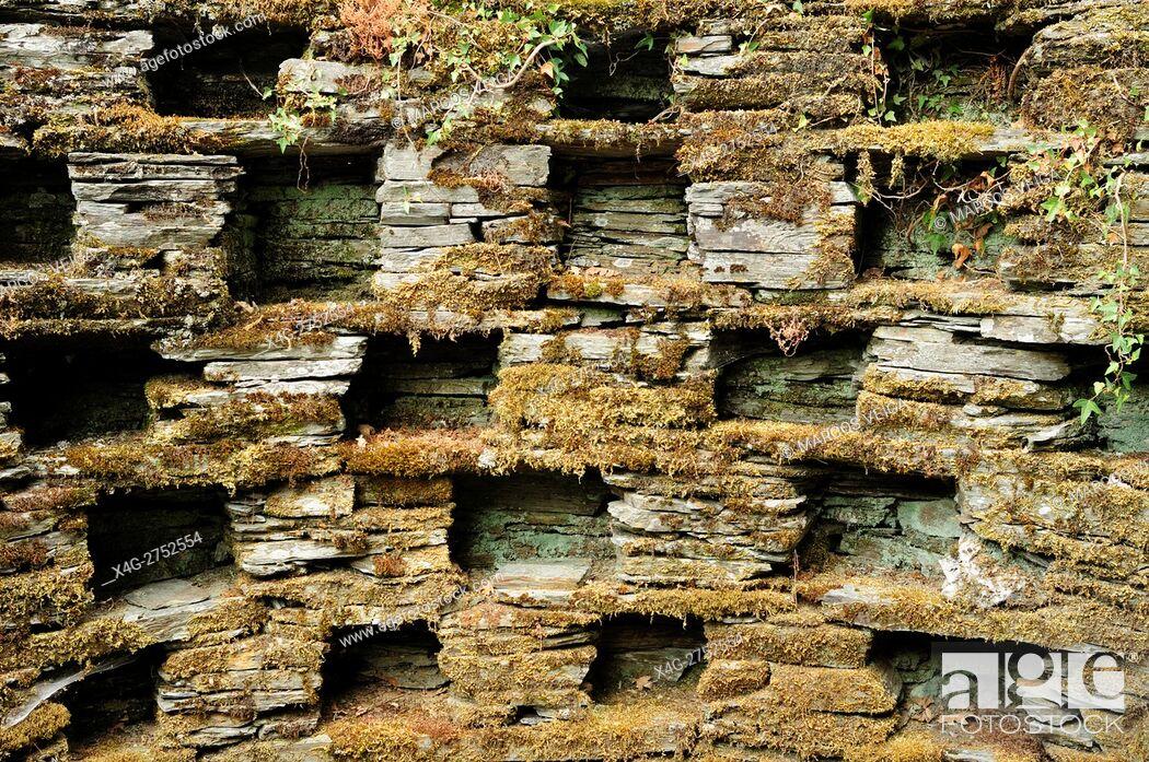 Stock Photo: Old dovecote pigeonholes.