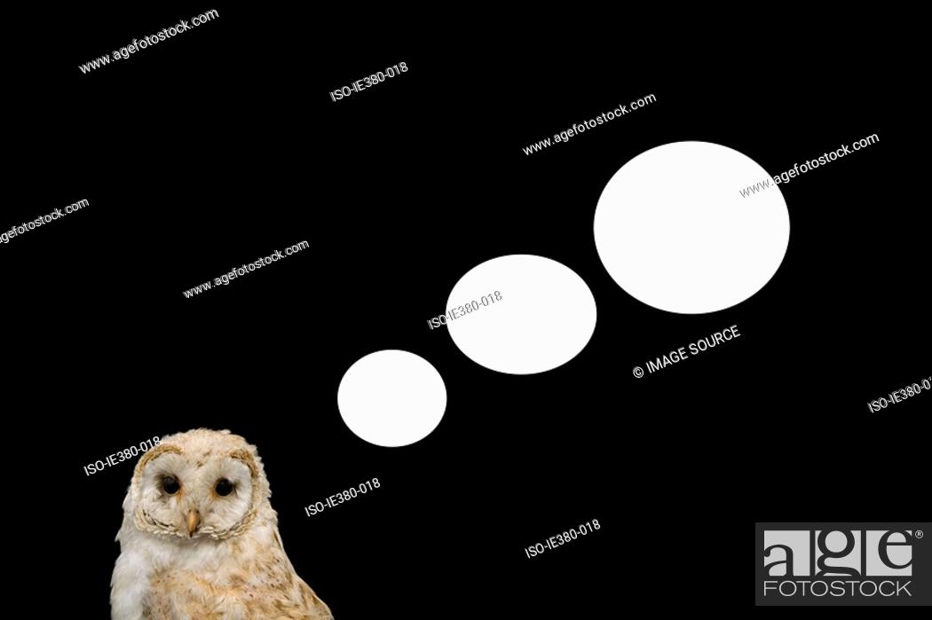 Stock Photo: Speech bubbles coming from an owl.