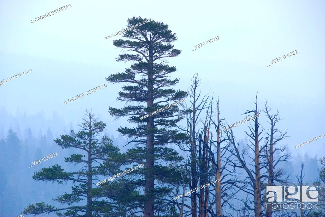 Stock Photo: Smoke from Lembert Dome, Yosemite National Park, California.