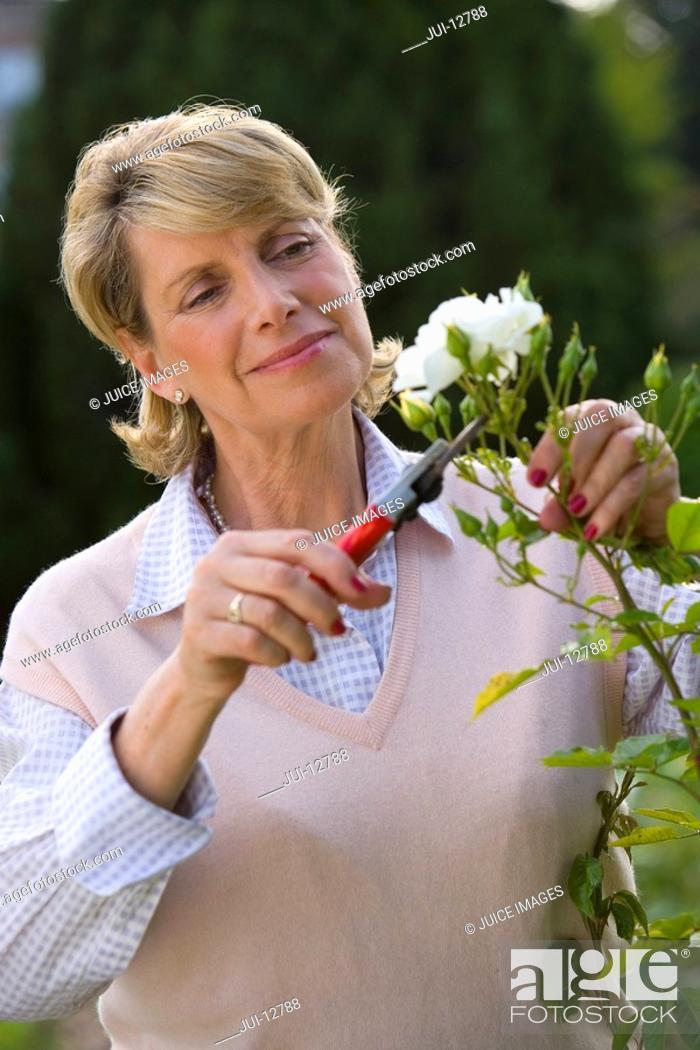 Stock Photo: Mature woman pruning bush, close-up.