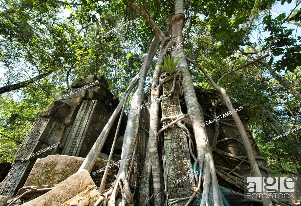 Stock Photo: Roots taking over the jungle temple of Beng Mealea, Siem Reap, Cambodia.