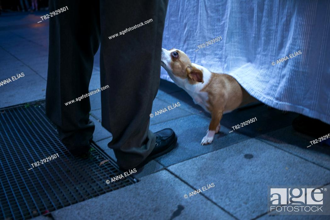 Stock Photo: Submissive dog and man's legs.