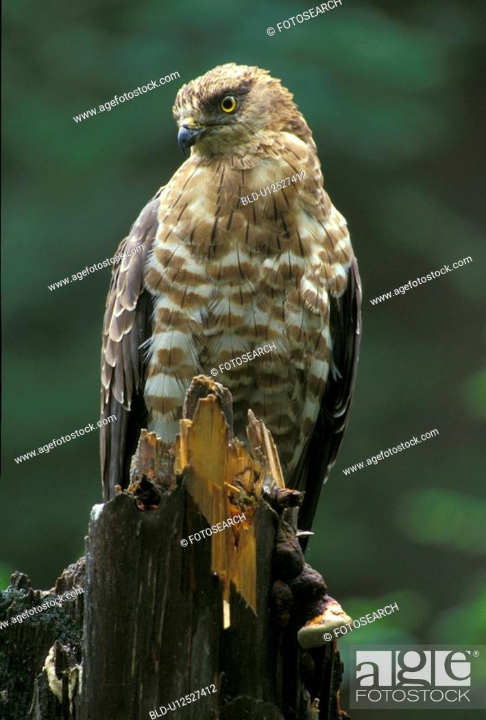 Stock Photo: federn, animals, aves, beak, bill.