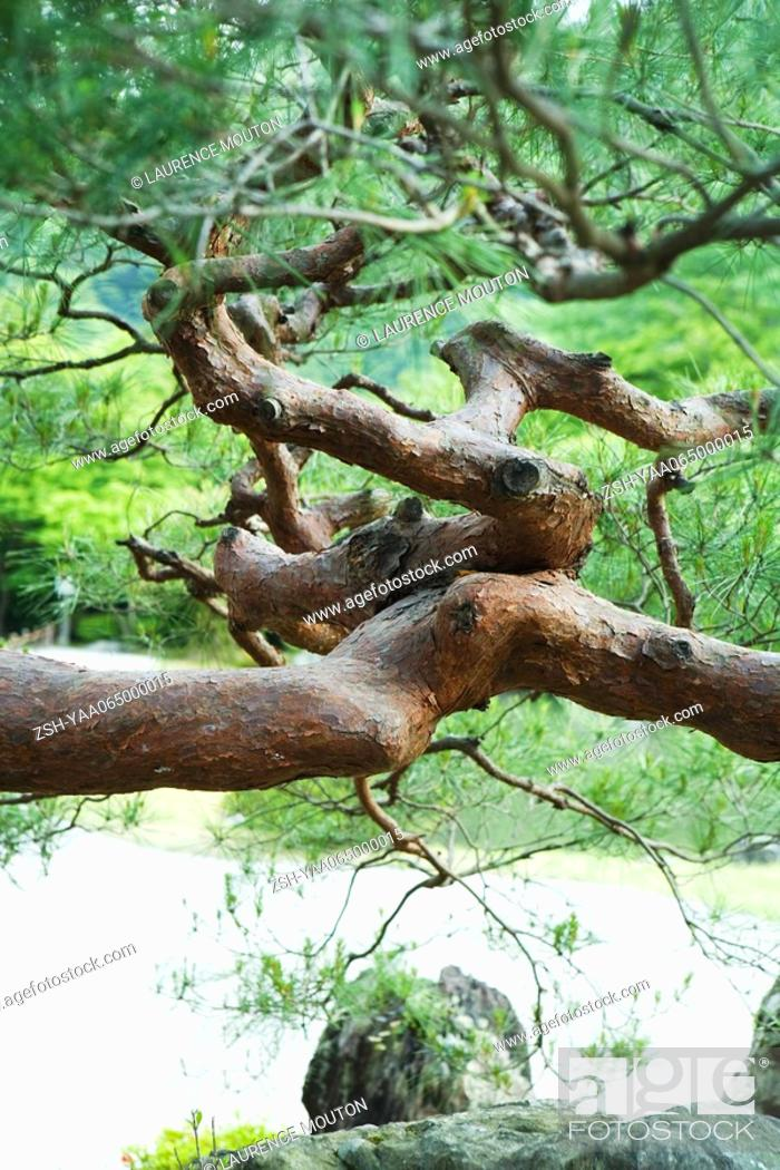 Stock Photo: Tree branches in twisted formation, close-up.
