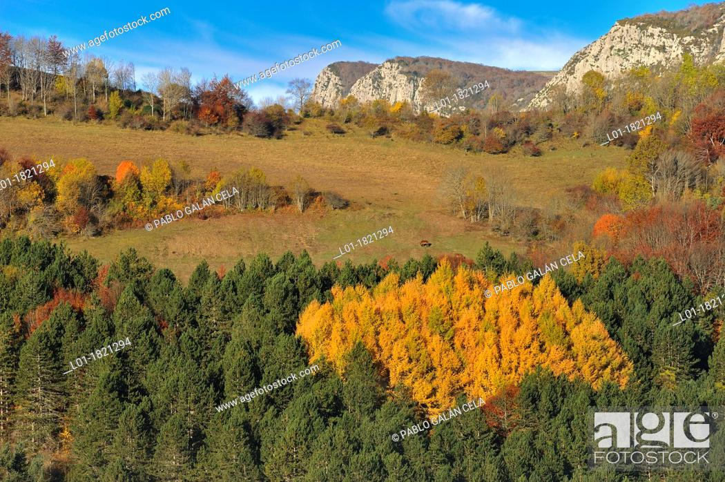 Stock Photo: Irati Forest Navarra.