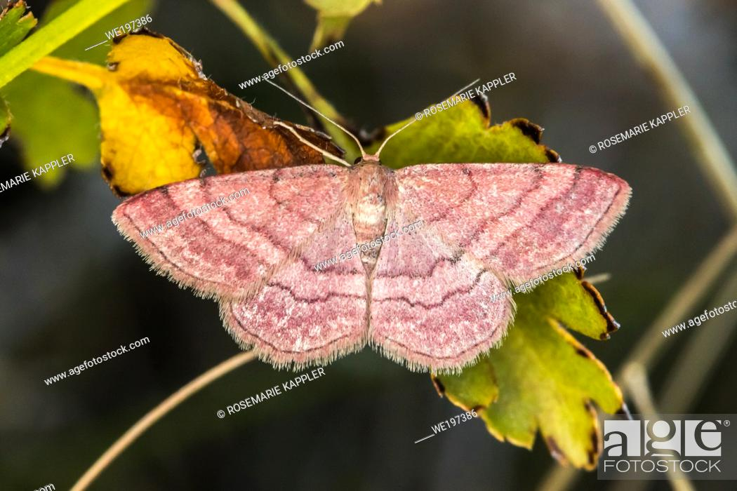 Stock Photo: A tawny wave is sittin on a grass-stock.