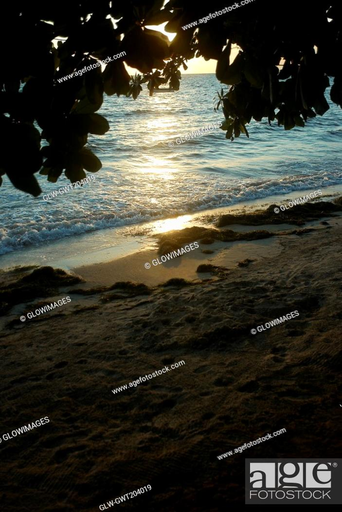 Stock Photo: Branches of a tree overlooking the beach, South West Bay, Providencia, Providencia y Santa Catalina, San Andres y Providencia Department, Colombia.