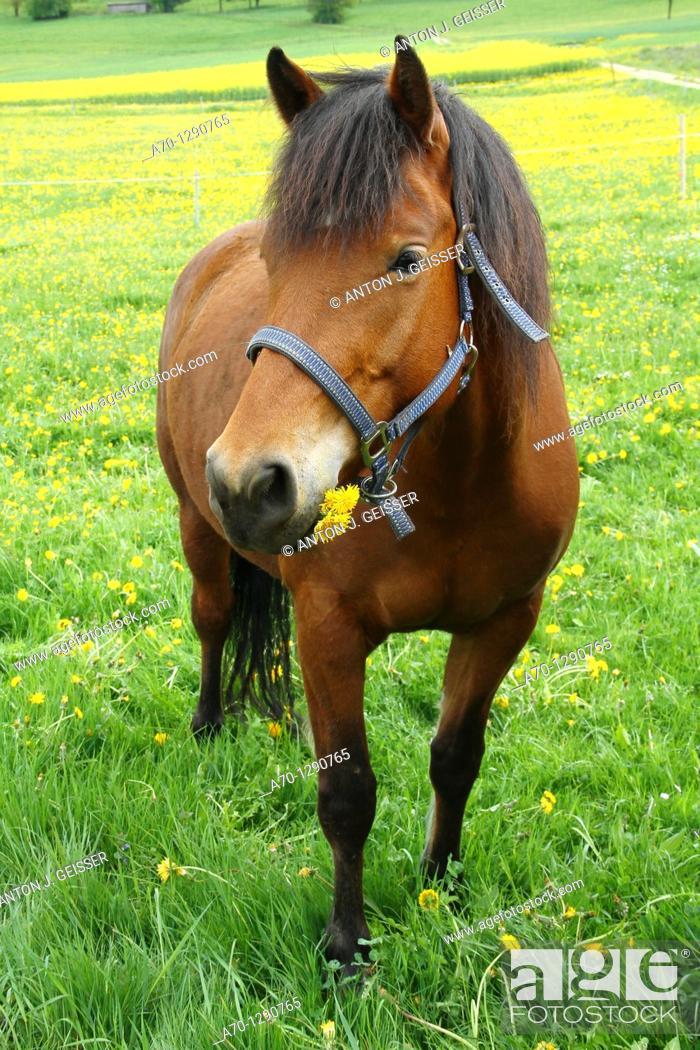 Stock Photo: Horse.