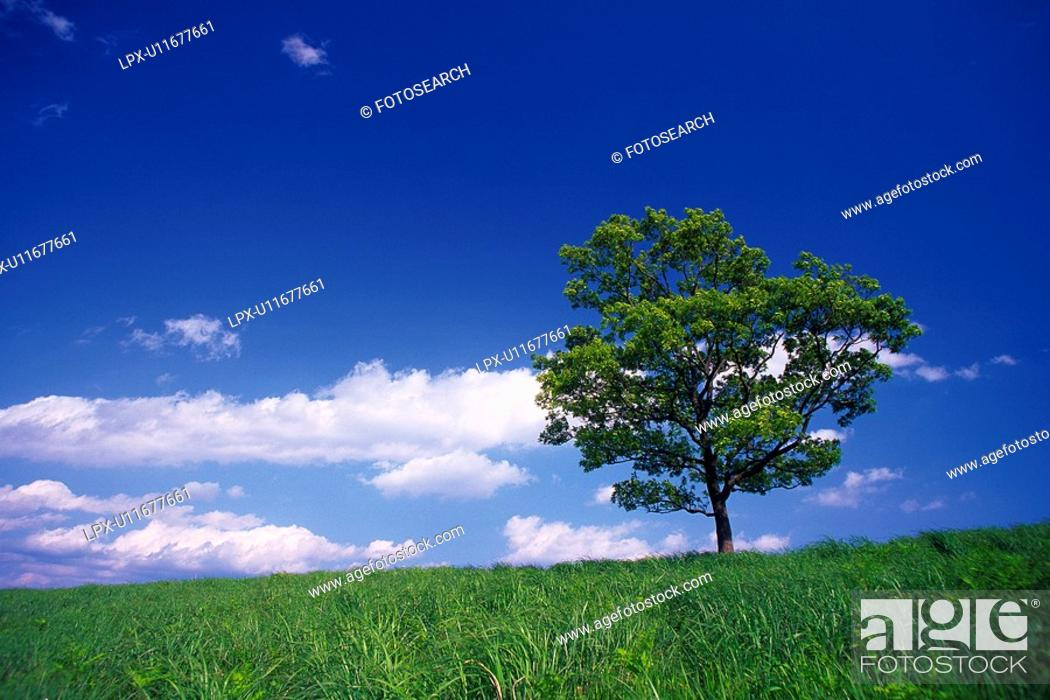 Stock Photo: Tree in the Field and Blue Sky, Low Angle View, Pan Focus.