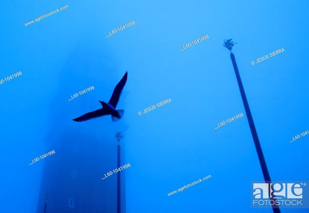 Stock Photo: Bird in Piazza San Marco, Veneto, Venice, Itali.