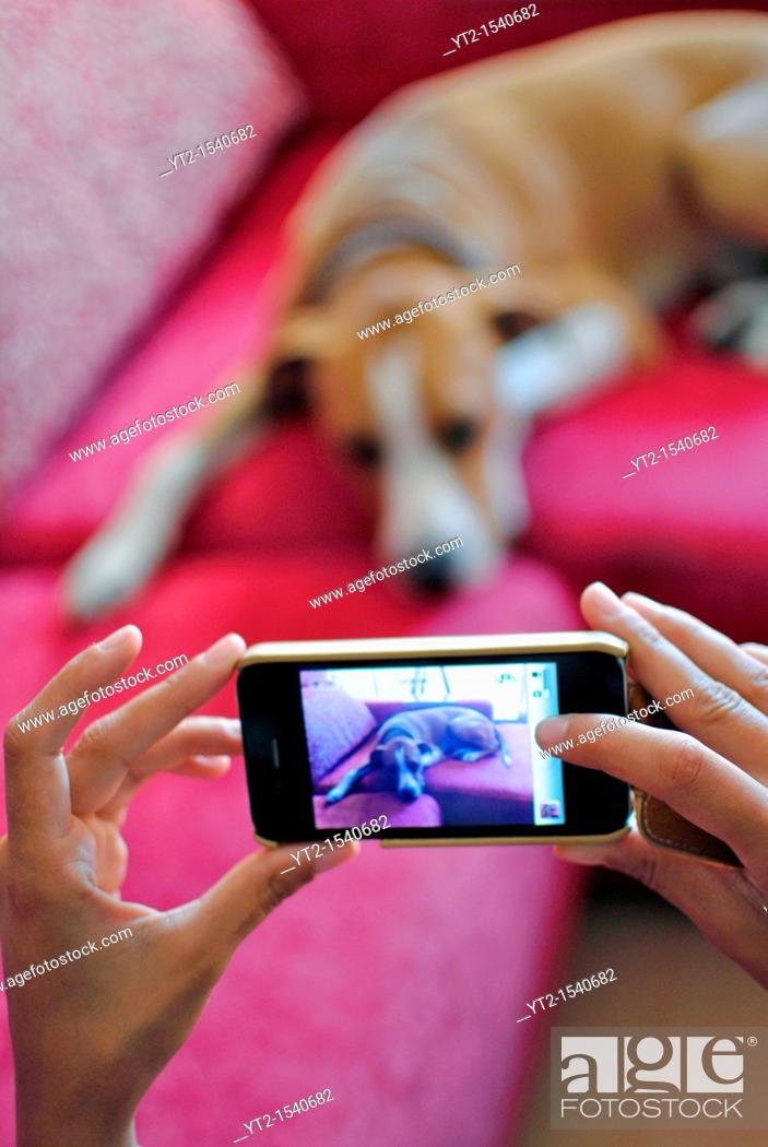 Stock Photo: Young girl taking a photo of her dog, with an iPhone.